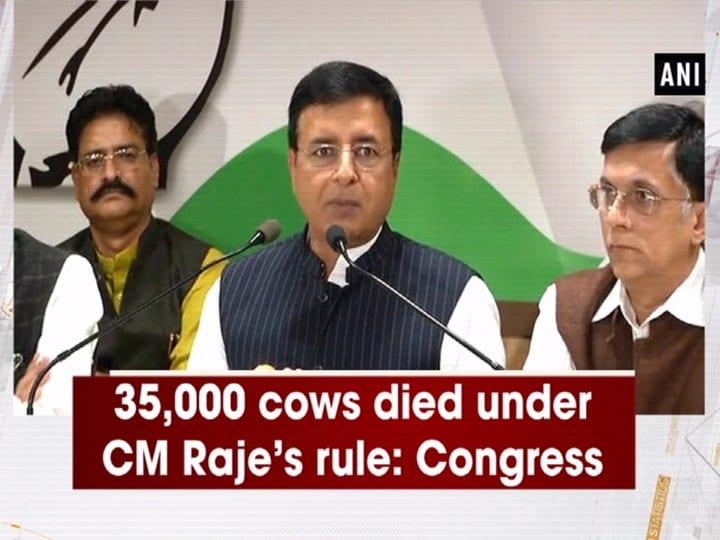 35,000 cows died under CM Raje's rule: Congress