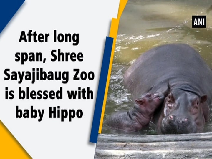 After long span, Shree Sayajibaug Zoo is blessed with baby Hippo
