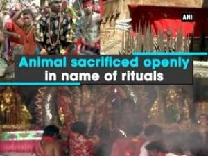 Animal sacrificed openly in name of rituals