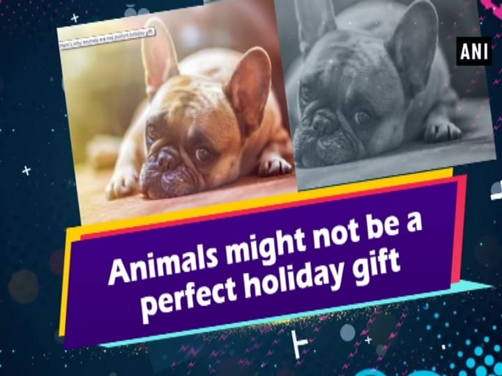 Animals might not be a perfect holiday gift