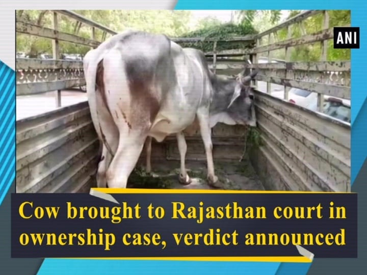 Cow brought to Rajasthan court in ownership case, verdict announced