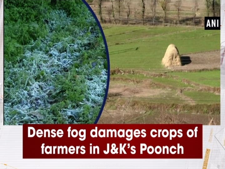 Dense fog damages crops of farmers in JandK's Poonch