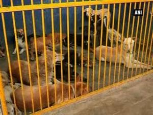 Dog population control programme a hit in Hisar