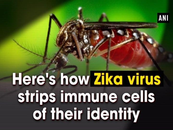 Here's how Zika virus strips immune cells of their identity
