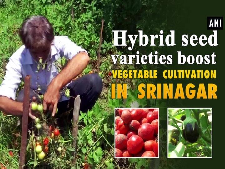 Hybrid seed varieties boost vegetable cultivation in Srinagar