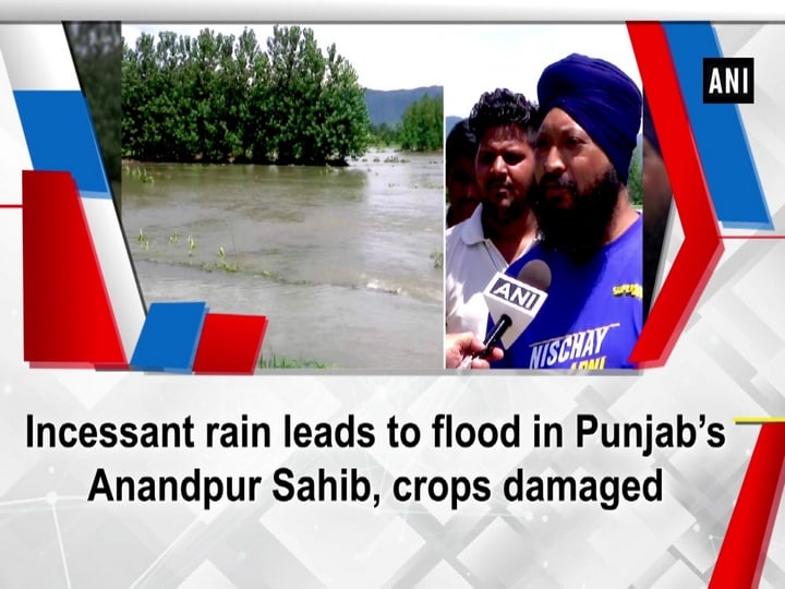 Incessant rain leads to flood in Punjab's Anandpur Sahib, crops damaged