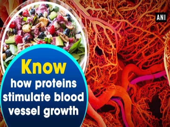 Know how proteins stimulate blood vessel growth