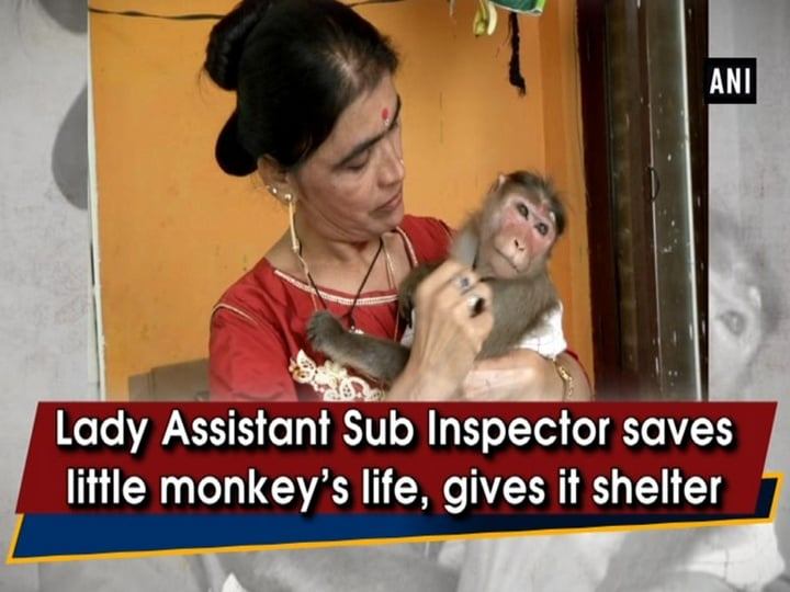 Lady Assistant Sub Inspector saves little monkey's life, gives it shelter