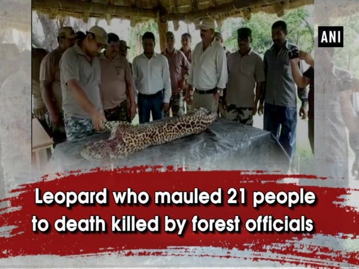 Leopard who mauled 21 people to death killed by forest officials