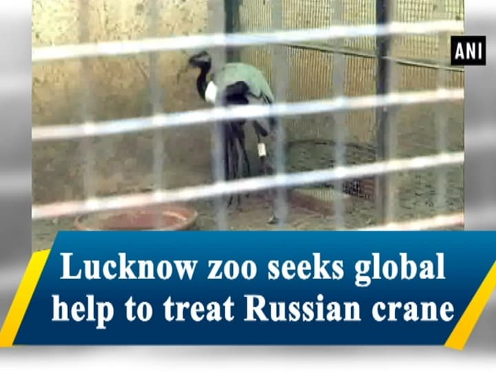 Lucknow zoo seeks global help to treat Russian crane