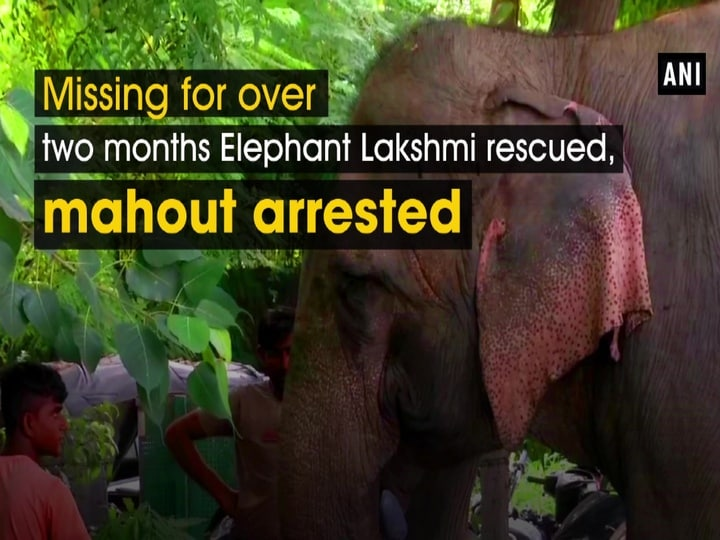 Missing for over two months Elephant Lakshmi rescued, mahout arrested