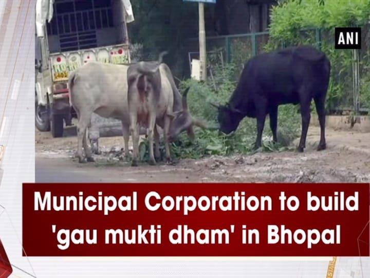 Municipal Corporation to build 'gau mukti dham' in Bhopal