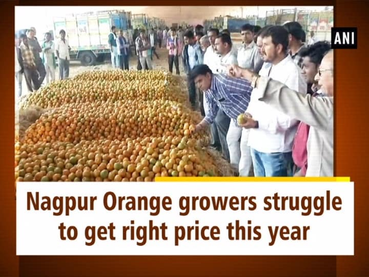 Nagpur Orange growers struggle to get right price this year