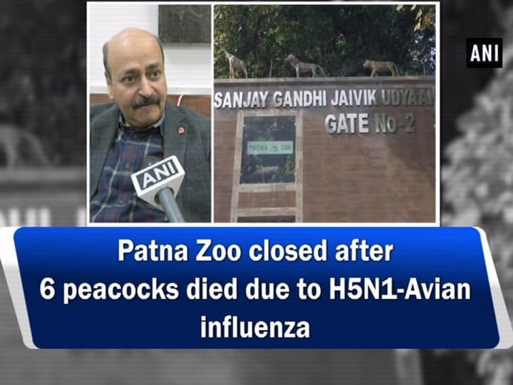 Patna Zoo closed after 6 peacocks died due to H5N1-Avian influenza