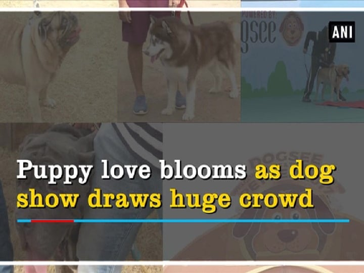 Puppy love blooms as dog show draws huge crowd