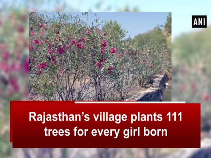 Rajasthan's village plants 111 trees for every girl born