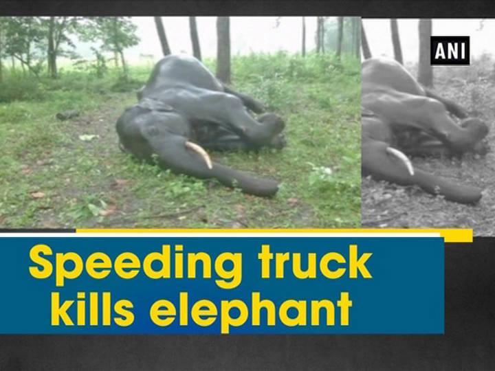Speeding truck kills elephant