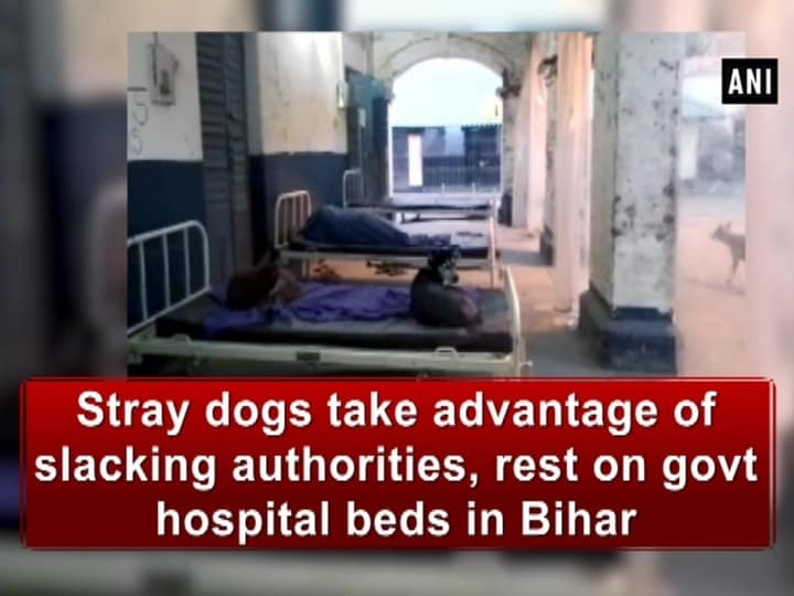 Stray dogs take advantage of slacking authorities, rest on govt hospital beds in Bihar