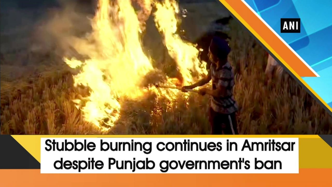 Stubble burning continues in Amritsar despite Punjab government's ban