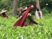 Tea workers in Tripura imparted skill development training to boost production