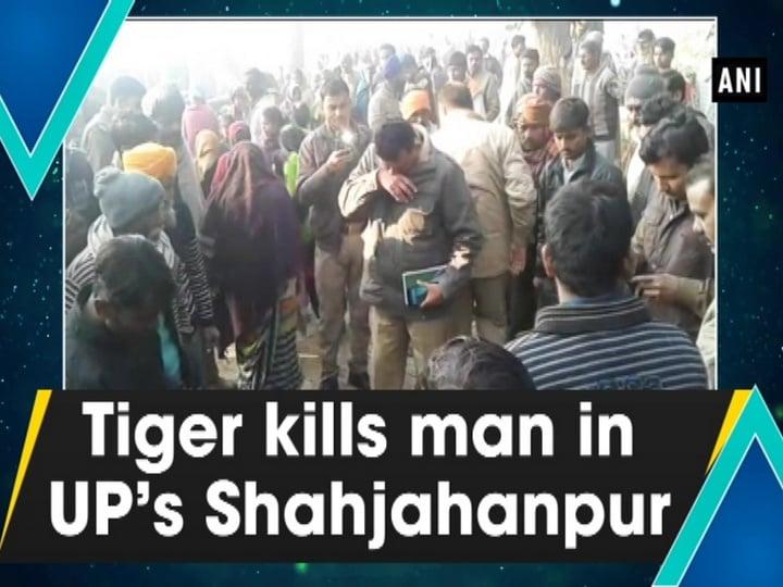 Tiger kills man in UP's Shahjahanpur