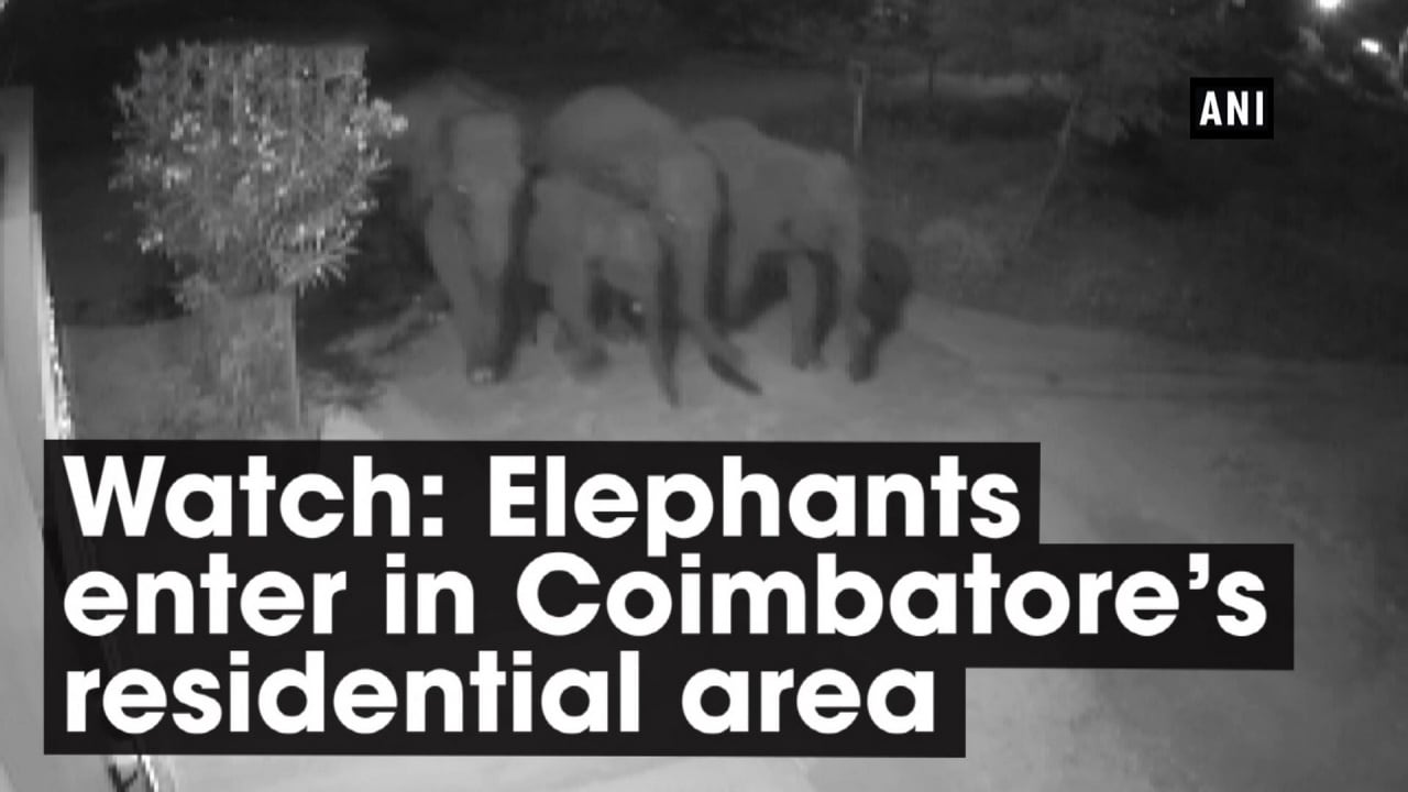 Watch: Elephants enter in Coimbatore's residential area