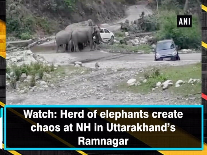 Watch: Herd of elephants create chaos at NH in Uttarakhand's Ramnagar