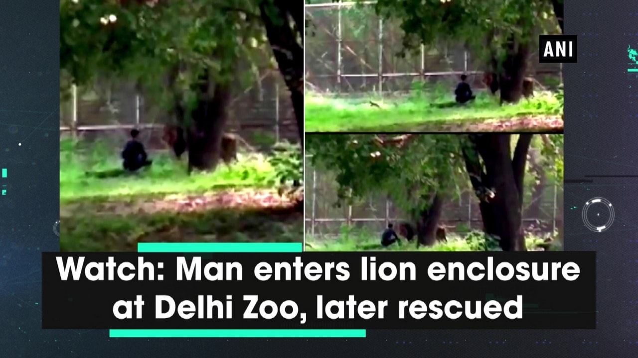 Watch: Man enters lion enclosure at Delhi Zoo, later rescued