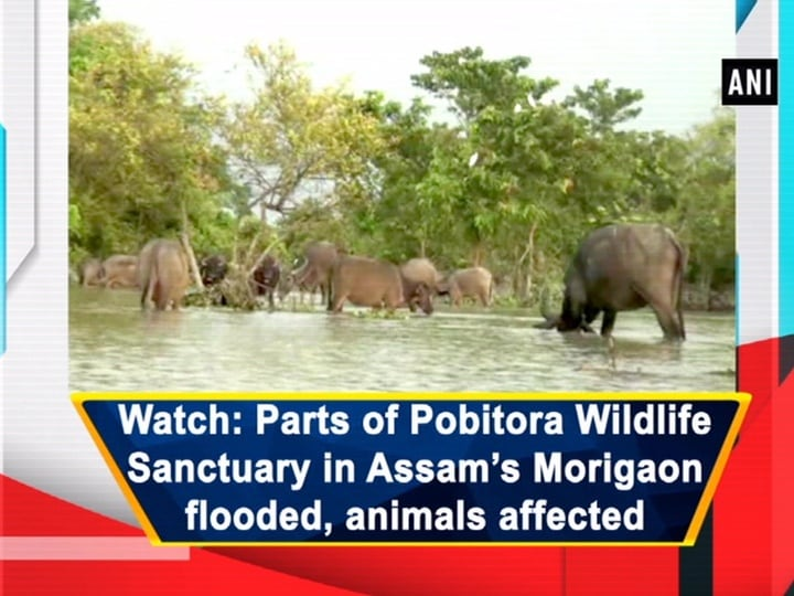 Watch: Parts of Pobitora Wildlife Sanctuary in Assam's Morigaon flooded, animals affected