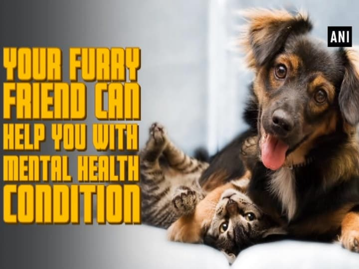 Your furry friend can help you with mental health condition