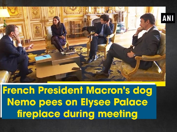 French President Macron's dog Nemo pees on Elysee Palace fireplace during meeting