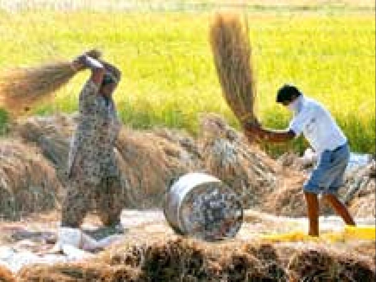 Rice production in West Bengal likely to be higher