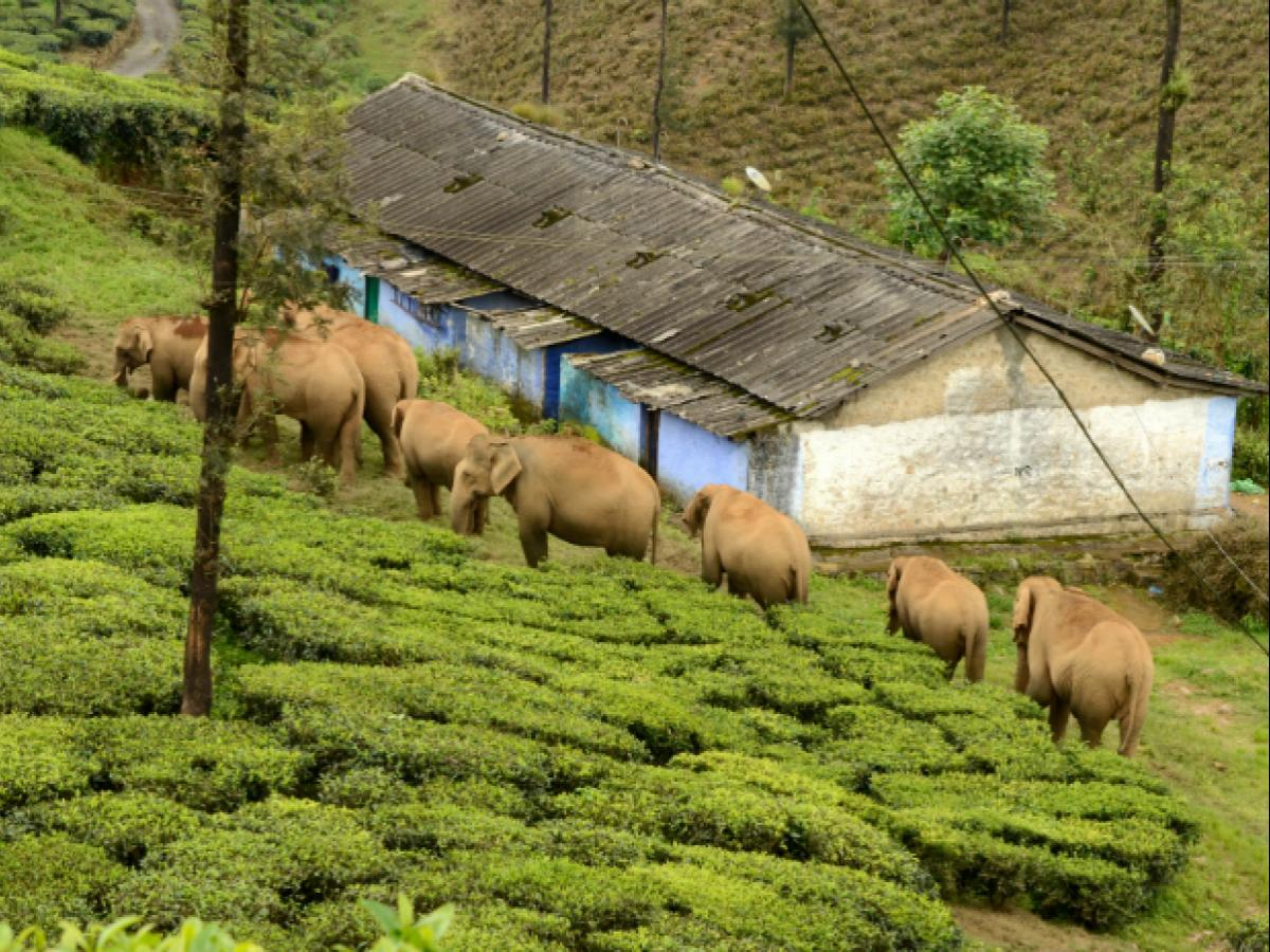 In Valparai, SMS alerts on wild elephants helps reduce