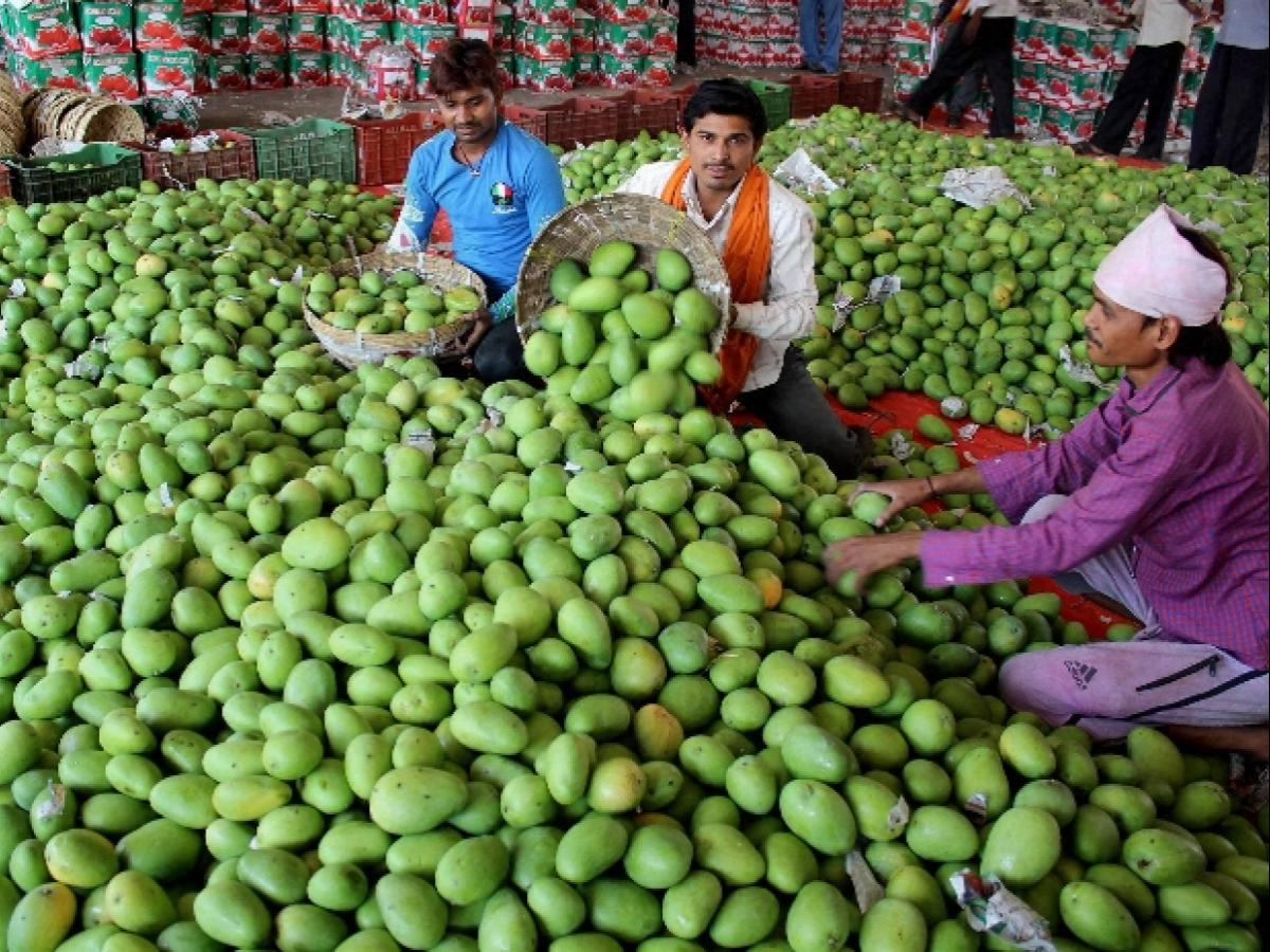 South Korea opens its market for Indian mango | Business