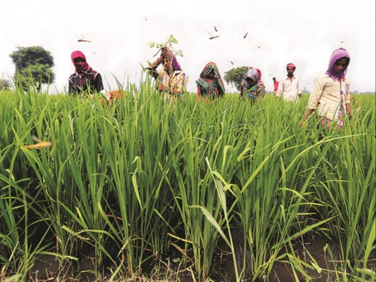 MP govt scheme to give farmers' children up to Rs 25 lakh loan for