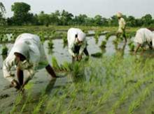 Centre asks Maha to improve performance of farm sector