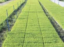 India, UK institutions sign agreements for collaboration in crop sciences