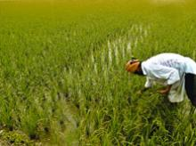 Future of agriculture in India: Is the nation ready?