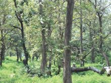 Environment ministry defines forests, legally