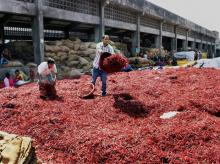 India signs protocol for export of chilli meal to Chinese markets