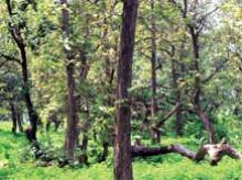 Government disowns its controversial draft National Forest Policy