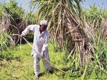 GST ministerial panel against sugar cess to compensate cane farmers