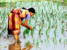 Paddy sowing down 10%, pulses area falls 37% this kharif season