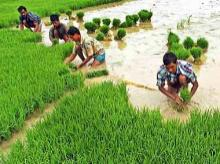 Uttar Pradesh clocks 250% rise in paddy procurement at 3.5 mn tonnes