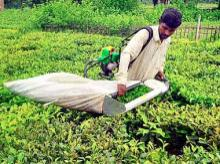 Sustainability certified India tea estates violate worker rights: Report