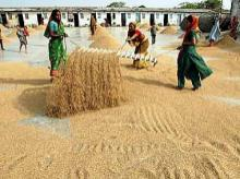 Grain procurement: Centre to raise FCI funding