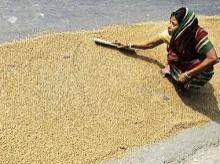 UP yet to identify 84 lakh people to be given subsidised food