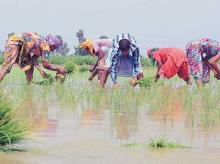 'Good rains to boost rural demand; Kharif farm income to rise'