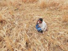 Govt conducting study on agrarian distress in major farmer suicide-hit states