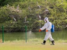 A Zoo staff member covers his face while spraying chemicals near a rosy Pelican enclosure to prevent the Bird Flu (H5N1 avian influenza virus) at Delhi Zoo.